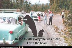 nice bears