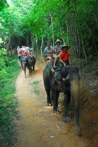 One-Hour Elephant Jungle Trek from Phuket Elephant Trekking, Thailand Elephants, Just Dream, Phuket Thailand, Chiang Mai, Southeast Asia, Places To Go, Beautiful Places, Wildlife