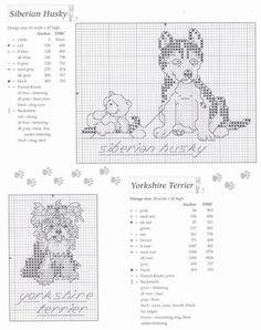 Animales y mariposas - Siberian husky y yorkshire terrier