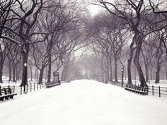 Central Park looking so pristine after a snowfall.