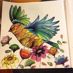 Colouring Techniques Bird Flying Johanna Basford Colored Pencils Adult Coloring Animal Kingdom Lettering Doodles Book