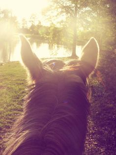 from the back of my horse. ♥ best seat in the world.