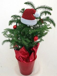 439 Best Holiday Plants Images Christmas Decor Christmas Cactus