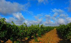 White Rioja shortage pushes Marques de Caceres into Rueda