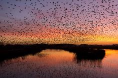 Max Thompson, Starling, Birdwatching, Wildlife Photography, Location History, Conservation, The Voice, Stuff To Do, Community