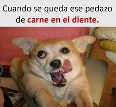 New Memes En Espanol Mexicanos Chistes Ideas Memes Humor, True Memes, New Memes, Frases Humor, Memes Funny Faces, Funny Dog Memes, Funny Relatable Memes, Hilarious Jokes, Fun Funny