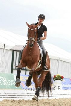 equestrian life : Photo