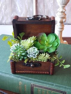 Small wood treasure chest arrangement with faux succulent arrangement beach house floralwedding ta Suculentas Succulents In Containers, Cacti And Succulents, Planting Succulents, Planting Flowers, Succulent Centerpieces, Succulent Arrangements, Diy Centerpieces, Decorations, Succulent Gardening