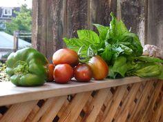 Green Bell pepper, Black Plum tomatoes, Mammoth Basil