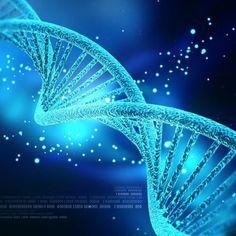 Diaporama > L'ADN dans tous ses états