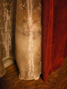 """Upon entering a room, you might, at first glance, be forgiven for saying to yourself, """"There is no cat here."""" But you would be wrong. Look closely. 