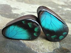 Real Butterfly Wing Teardrop Plugs Areng Wood by AsanaNaturalArts