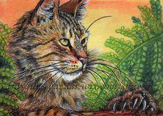 ACEO Original art animals cats wild bobcat sunset miniature drawing -SMcNeill