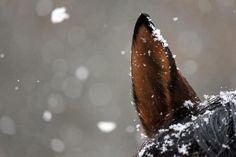 snow || bay horse ears winter