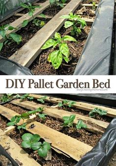 Gardening can be so enjoyable when you have the right container garden! I love thisDIY Pallet Garden! It teaches you How to make a Raised Wood Pallet Garden Bed which reduces weeds and improves the moisture retension of your garden leaving you with a lush Building A Raised Garden, Raised Garden Beds, Raised Beds, Pallets Garden, Wood Pallets, Pallet Gardening, Gardening For Beginners, Gardening Tips, Gardening Quotes