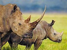 animais - Bing images