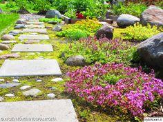 käytävä,asetelma,puutarha,värikäs,piha