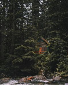 cabin nestled in the trees