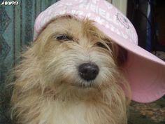Caption This: ______   #captionthis #dog #funny #dog