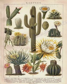 Cactus Desert Plants 8 x 10 JPG Digital by InstaDesignPrints Illustration Botanique, Plant Illustration, Botanical Illustration, Vintage Botanical Prints, Botanical Drawings, Botanical Art, Impressions Botaniques, Cactus Planta, Suculentas Cactus