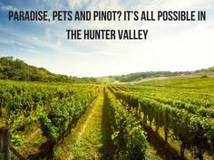 Paradise, Pets and Pinot? It's All Possible In the Hunter Valley - Anita Hendrieka-Paradise, Pets and Pinot?! Is that even possible? And all in the one weekend?! The Hunter Valley is an extraordinary wine region.