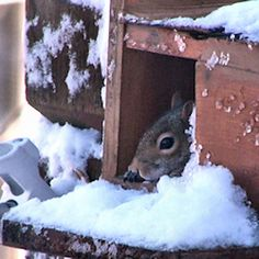 Build a squirrel nesting box and keep the furry little guys warm this winter! The squirrel in this picture had her babies in there! Squirrel Feeder Diy, Squirrel Home, Baby Squirrel, Bird Feeders, Squirrel Pictures, Miniature Donkey, Animal Projects, Nests, Diy Stuffed Animals