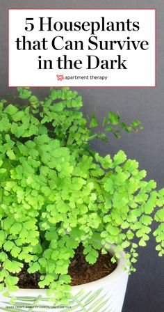 5 Houseplants That Survive In Low Light Indoor Plants Low Light Apartment Therapy Inside Plants, Cool Plants, Grow Lights For Plants, Nature Plants, Organic Gardening, Gardening Tips, Indoor Gardening, Vegetable Gardening, Hydroponic Gardening