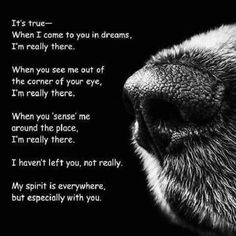22 trendy Ideas for dogs love quotes rainbow bridge Pet Loss Grief, Loss Of Dog, Dog Loss Quotes, Pet Quotes, Cat Love Quotes, A Girl And Her Dog Quotes, Mood Quotes, Miss My Dog, Pitbulls