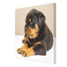 Cute rottweiler puppy canvas print - dog puppy dogs doggy pup hound love pet best friend