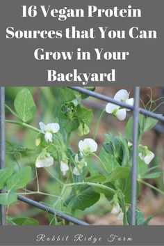 One of the criticisms I've heard about vegan homesteading is that you just can't live off vegetables. To be honest I totally get where… Garden Plants Vegetable, Planting Vegetables, Veggie Gardens, Veggies, Quotes Vegan, Diy Nature, Vegan Protein Sources, Vegetarian Protein, Organic Gardening Tips