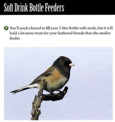 Make a recycled plastic bottle bird feeder