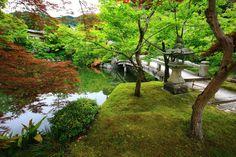 京都永観堂の弁天堂と鮮やかな青もみじと苔