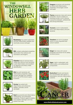Summer's the perfect time for growing your own veggies & herbs. But if short on space, here's how to plant your own indoor herb garden to enjoy year-round.