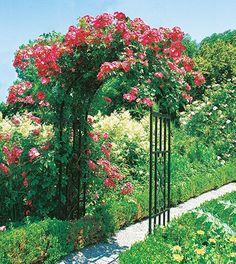 Beckmann Rosenbogen Plus:   Garten Ideen Gestaltung Garten Deko Garten  Dekoration Garten Diy Garten