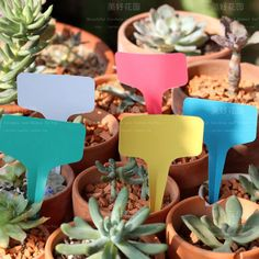 Garden party buffet food signs inspiration...mini flower pots with plant markers to label each dish.