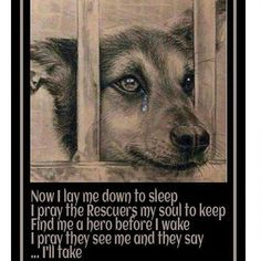 LOVE THIS #adoptdontshop Repost @animalsplanetsp  Please if you can't adopt an animal at the shelter right now...how about going to a thrift store and buying some blankets and toys wash them and give them to your local shelter. Nothing disturbs me more than seeing these babies in the shelter No blanket No toy to keep them company. There is always things you can do if you can't adopt right now volunteer to walk dogs spend time with the kitties and bunnies anything  #shelterlifesucks #behuman…