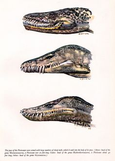 "Plesiosaurs Illustration by Zdenek Burian, 1963 ""Prehistoric Sea Monsters,"" 1964"
