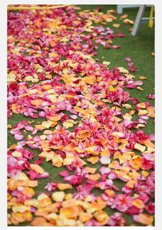 Rose Petals & Pink Plumeria - Wedding Aisle Petal Path