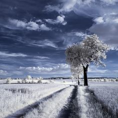 Purge me with hyssop, and I shall be clean: wash me, and I shall be whiter than snow. (Psalm 51:7 KJV)