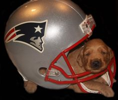 His name is #Bruschi! #Patriots
