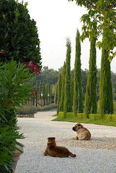 Virtual Vacation at the Borgo Santo Pietro   Hotel Chic