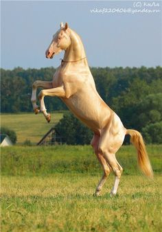 Ак Гёз - альбомы - Николай Z - конники - Equestrian.Ru, конное обозрение / Лошади и конный спорт