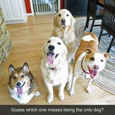 Screw it, Just Give Me the Medicine Bacon - Funny pictures and memes of dogs doing and implying things. If you thought you couldn't possible love dogs anymore, this might prove you wrong. Funny Dog Memes, Funny Animal Memes, Cute Funny Animals, Funny Animal Pictures, Funny Cute, Funny Dogs, Dog Humor, Bacon Funny, Bacon Bacon