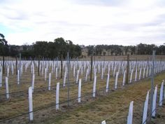 Sutton Forest Estate Wines
