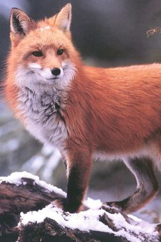 Such beautiful animals. How does anyone feel right about wearing their skins??? #makesnosense