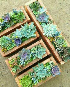 Succulentes dans pot bois rectangulaire - 10 idées de composition florale avec des succulentes, plantes grasses et cactus - Esprit Laïta