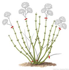 Prune the hydrangea Cactus Plants, Garden Plants, Compost, Pruning Hydrangeas, Home Flowers, Green Nature, Garden Care, Plantar, Trees And Shrubs