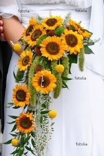 sunflowers cascade with billy balls, green mini amaranthus tails.