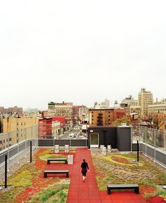 green rooftop in the Bronx....bedford housing.  I went here my first day as a Fordham student.  Such an amazing way to be introduced to the beauty of the Bronx.