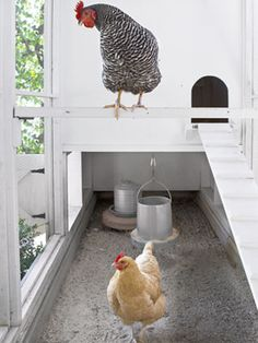 How to Build the Ultimate Chicken Coop
